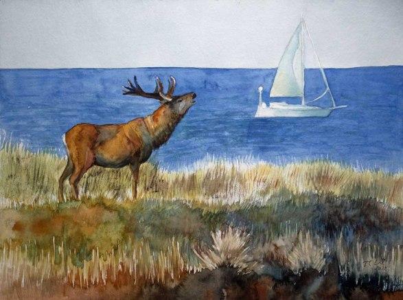 Rothirsch - Wahrzeichen der Ostseeküste auf dem Darß (c) Aquarell von Frank Koebsch