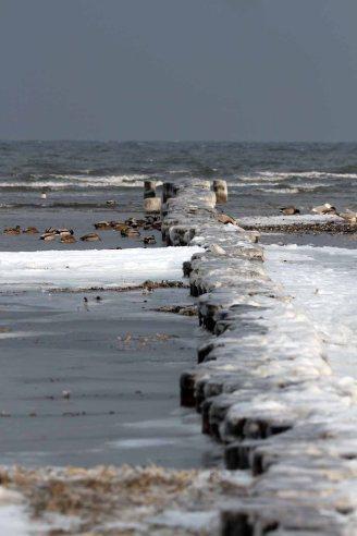 Winter an der Ostsee in der Krenzone des Nationalparks Vorpommersche Boddenlandschaft (c) Frank Koebsch (3)