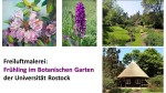 Freiluftmalerei - Frühling im Botanischen Garten der Universität Rostock