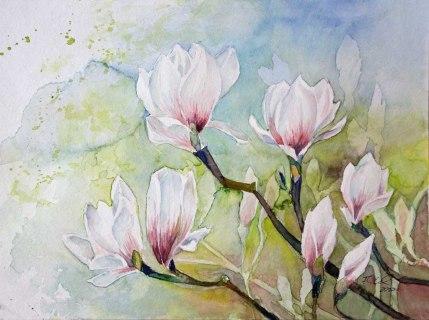 Magnolien Blüten als Frühlingsboten (c) Aquarell von Frank Koebsch