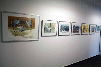 Einblick in unsere Ausstellung Wildes Land (c) Frank Koebsch (3)