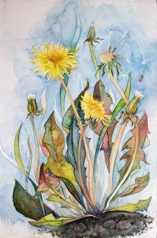 Farben der Sommerwiese (c) ein Löwenzahn Aquarell von Frank Koebsch