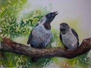Liebesgeflüster zweier Krähen (c) Aquarell von Frank Koebsch