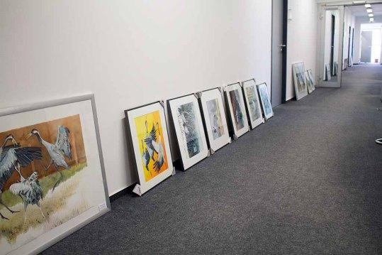 Sortieren der Aquarelle für unsere Ausstellung Wildes Land (c) Frank Koebsch (2)