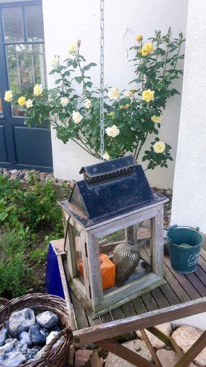 Rosen der Alten Büdnerei in Kühlungsborn (c) Frank Koebsch (4)