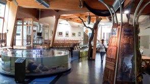 Ausstellung über das Wasser Umweltbildungszentrum des Wildparks MV (c) FRank Koebsch (1)