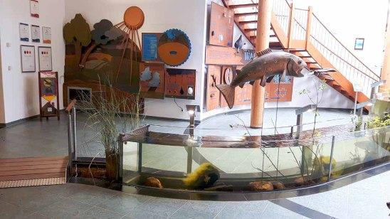 Ausstellung über das Wasser Umweltbildungszentrum des Wildparks MV (c) FRank Koebsch (2)