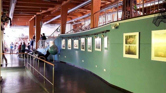 Ausstellungsbereich vor dem Aqua Tunnel im Umweltbildungszentrum des Wildparks MV (c) Frank Koebsch (1)