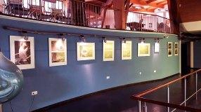 Ausstellungsbereich vor dem Aqua Tunnel im Umweltbildungszentrum des Wildparks MV (c) Frank Koebsch (2)