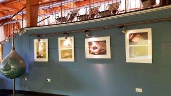 Ausstellungsbereich vor dem Aqua Tunnel im Umweltbildungszentrum des Wildparks MV (c) Frank Koebsch (3)