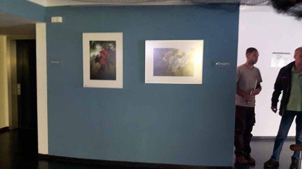 Bilder an der Wand zur Treppe vor dem Aquarium