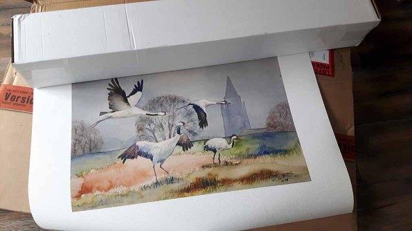 Druck des Aquarells - Kraniche im Mecklenburger Land - auf Hahnemühlepapier Albrecht Dürer (c) Frank Koebsch