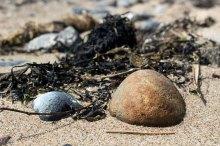 Steine am Strand von Klein Zicker (c) FRank Koebsch
