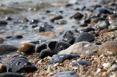 Steine im Spühlsaum am Strand von Klein Zicker (c) FRank Koebsch