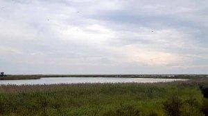 Boddenwiesen am Darßer Ort im August (c) FRank Koebsch