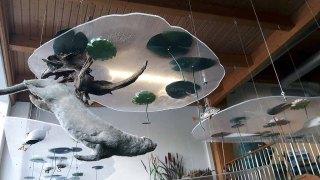 Fischotter im Umweltbildungszentum des Wildparks MV (c) Frank Koebsch (1)