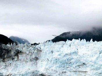 Möwe in der Glacier-Bay Kanadas (c) FRank Koebsch (1)