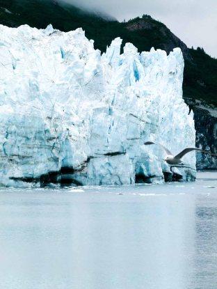 Möwe in der Glacier-Bay Kanadas (c) FRank Koebsch (1