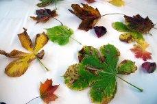 Schnappschüsse aus dem Aquarellkurs - bunter Herbstblätter (c) FRank Koebsch (5)