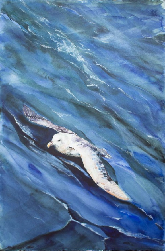 Sturmvogel (c) Aquarell von Hanka Koebsch