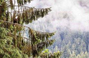 Weißkopfseeadler in Juneau (c) FRank Koebsch (2)