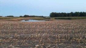 abgeerntete Maisfelder bei Sanitz (c) FRank Koebsch