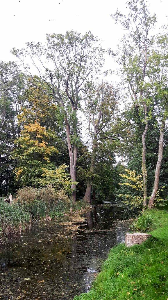 Herbst in Middelhagen (c) FRank Koebsch (1)