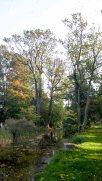 Herbst in Middelhagen (c) FRank Koebsch (3)
