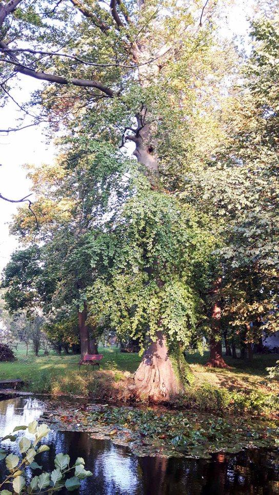 Herbst in Middelhagen (c) FRank Koebsch (4)