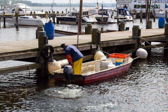 Schnnappschüsse aus dem Hafen von Rerik (c) FRank Koebsch (1)