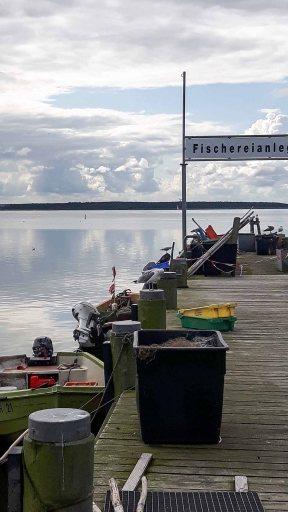 Schnnappschüsse aus dem Hafen von Rerik (c) FRank Koebsch (6)