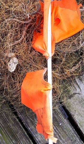 Schnnappschüsse aus dem Hafen von Rerik (c) FRank Koebsch (7)