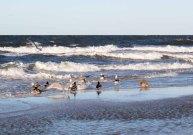 Enten und Möwen am Ostseestrand (c) Frank Koebsch (3)