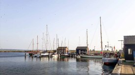 Kutter, Segelboote und Traditionssegler im Hafen von Gager (c) FRank Koebsch