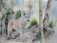 Neue Wege (c) ein Wolfsaquarell von Hanka Koebsch