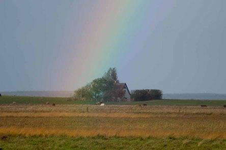 Regenbogen über der Naturschutzstation auf dem Großen Schwerin an der Müritz (c) FRank Koebsch (1)