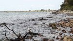 Schnappschusss beim Malen am Strand von Heiligendamm (c) FRank Koebsch (2)