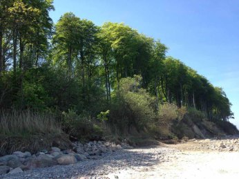 Steilküste mit Buchenwald am Strand von Heiligendamm (c) Kirsten Paulsen