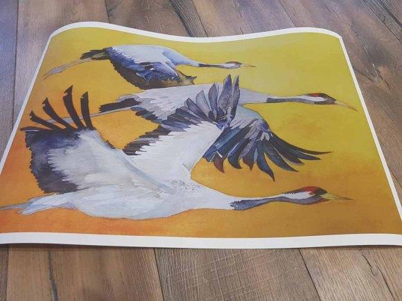 Das Kranich Aquarell - Vögel des Glücks - als Druck auf Hahnemühlepapier Albrecht Dürer (c) Frank Koebsch