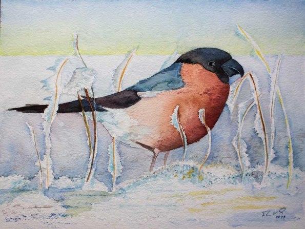 Dompfaff im Winter (c) Aquarell von Frank Koebsch
