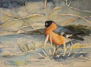 Gimpel im Winter (c) Aquarell von Fraank Koebsch