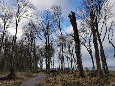 Sturmschäden im Gespensterwald Nienhagen (c) FRank Koebsch (4)