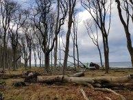 Sturmschäden im Gespensterwald Nienhagen (c) FRank Koebsch (6)