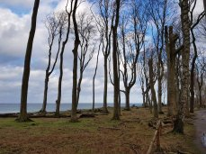 Winter im Gespensterwald Nienhagen (c) Frank Koebsch (5)