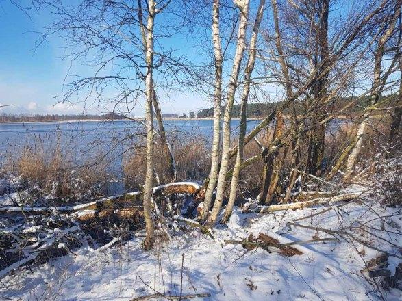 Die Biber haben den Uferbereich der Menzliner Deichpfade gestaltet (c) Frank Koebsch (1)