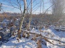Die Biber haben den Uferbereich der Menzliner Deichpfade gestaltet (c) Frank Koebsch (2)