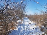 Winter auf dem Naturlehrpfad Menzliner Deichpfade (c) Frank Koebsch (4)