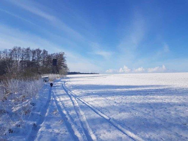 Winterlandschaft an der Peene bei Menzlin (c) FRank Koebsch (2)
