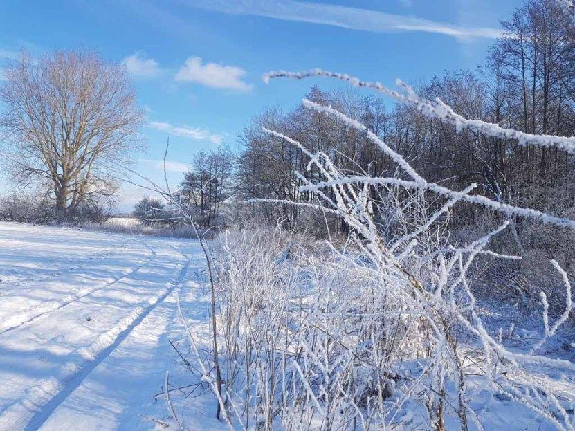 Winterlandschaft an der Peene bei Menzlin (c) FRank Koebsch (3)
