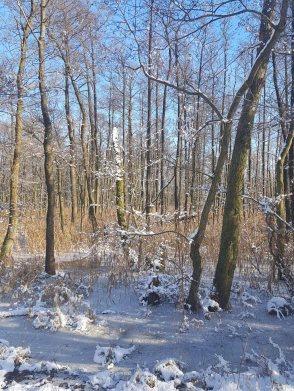 Winterwald an der Peene bei Menzlin (c) FRank Koebsch (1)